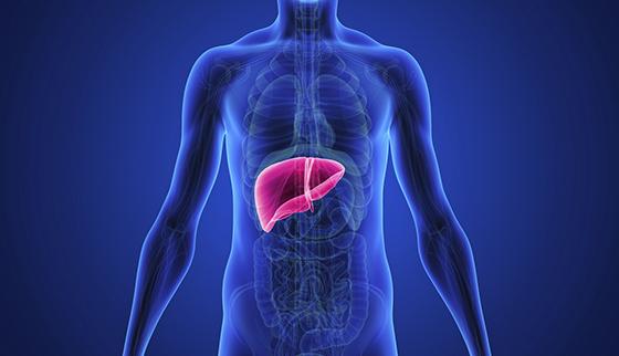 Liver Health Formula Ingredients List - Improve Overall Health