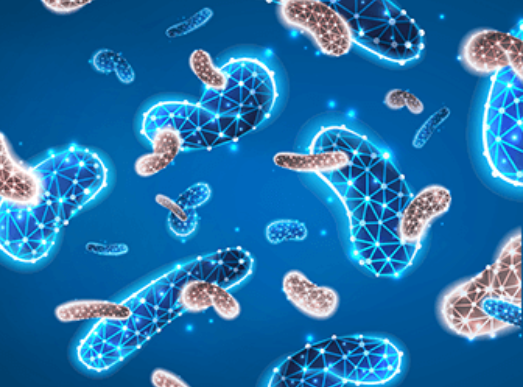Oweli Probiotic 40 Billion Price