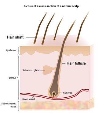 ultra fx10 hair reviews